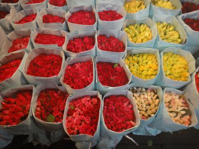 2011GWバンコク(3)下町旅情/パーククローン花市場