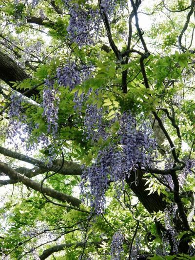 玉敷神社と玉敷公園に春を感じて・・