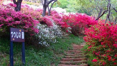 織姫公園のつつじの園
