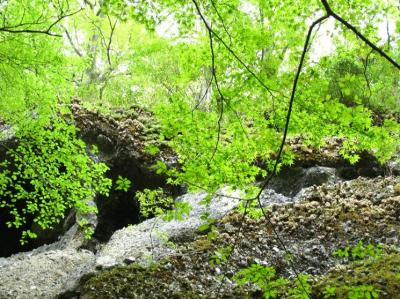 ●この地球、美しい緑