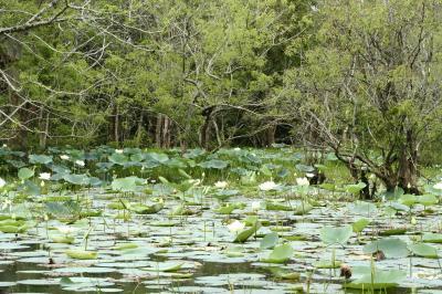 ☆インド洋の楽園☆スリランカ6日間の旅(5)【ハバラナ・水牛車&ボート編】