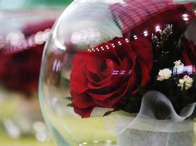 国際バラとガーデニングショウ 2011