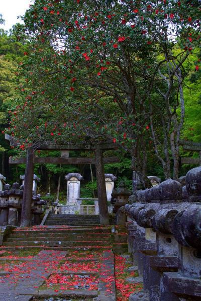 東光寺の椿
