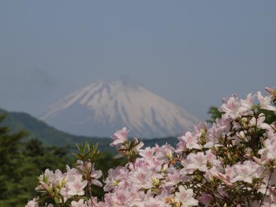 2011年5月21日 箱根ホテル花月園のツツジの庭園が見ごろを迎えようとしていました。