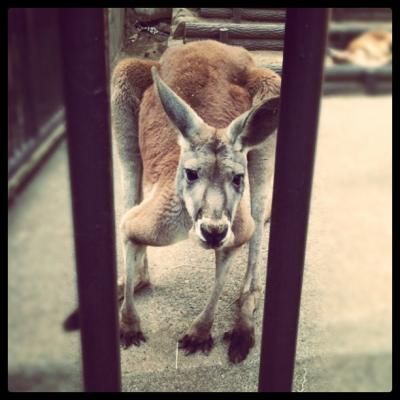 春の多摩動物公園