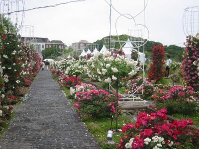 『H.T.B 100万本のバラの花』