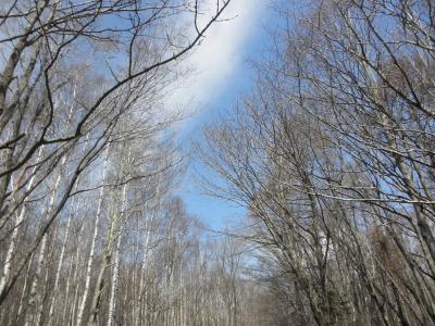 芽吹きの野幌森林公園
