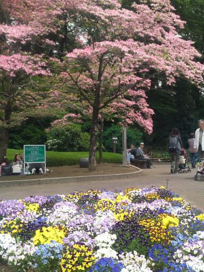春の川口グリーンセンターは花とりどり