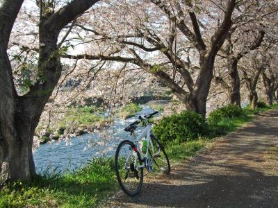 自転車でウロウロ…⑤桜を見ながら由比から富士へ