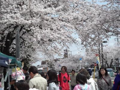 野田 清水公園 お花見