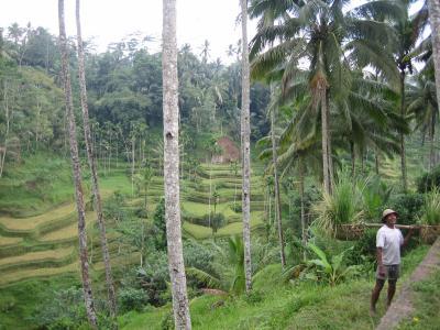 3回目のバリ島