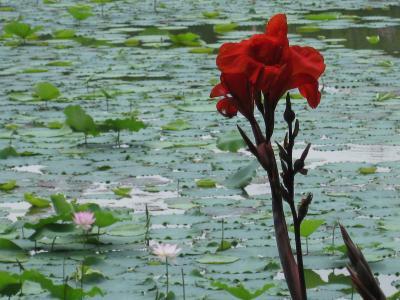 広東省の花