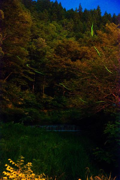 """2011年 神奈川県 藤野の蛍の里 ~""""上河原ほたるまつり""""に向けて~"""
