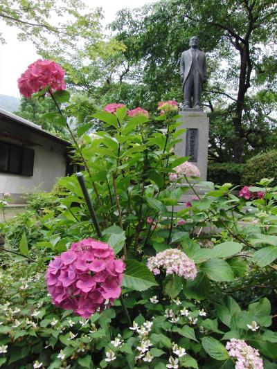 静寂の中でしっとりと紫陽花を  ~ 久安寺(大阪池田市) ~