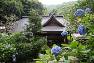 箱根のあじさい寺:阿弥陀寺