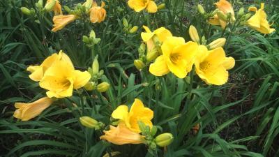 花菜ガーデンでまったり花見物
