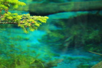 uraraurara裏摩周~カメの子は居ない神の子池~硫黄に染まったエゾイソツツジ