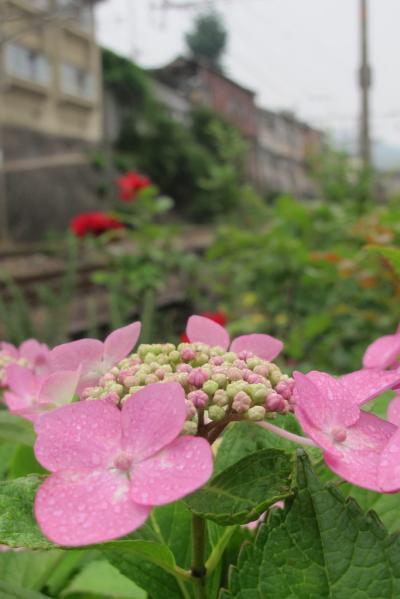 尾道・鞆航路で癒しの旅へ