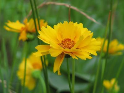 日本で見られるお花としばしお別れ───海外旅行の前日に