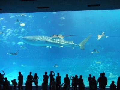 ≪国内ぷち逃走4≫→沖縄…2日目美ら海水族館