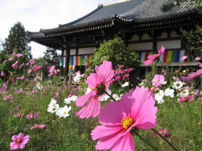2010年10月奈良  般若寺の古仏とコスモス
