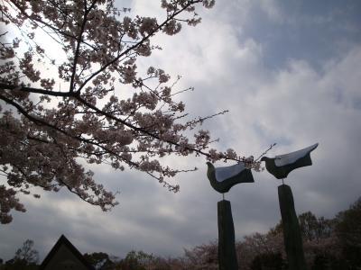 2011、花見は船越堤公園にきまり