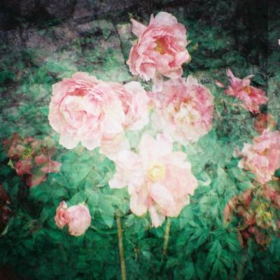 花の長谷寺