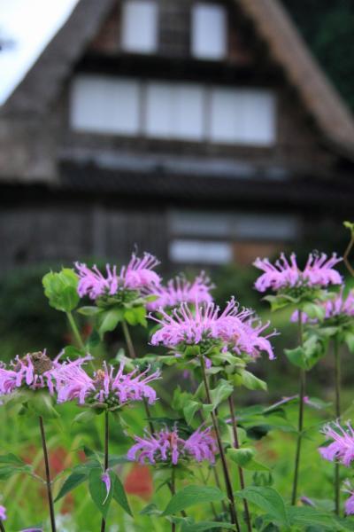 富山 夏の五箇山 菅沼集落から相倉集落へ