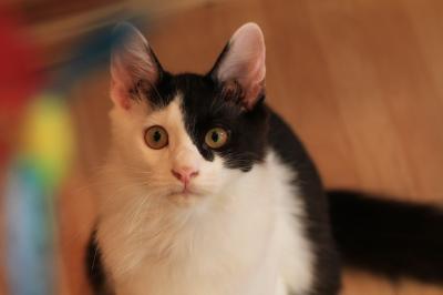 【猫カフェ巡り23】 2011年5月にオープンしたばかりの猫カフェ 「猫喫茶 猫の箱」