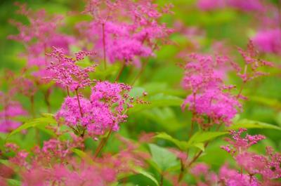 ふらり天神平へ~夏の花々とSLみなかみ号~