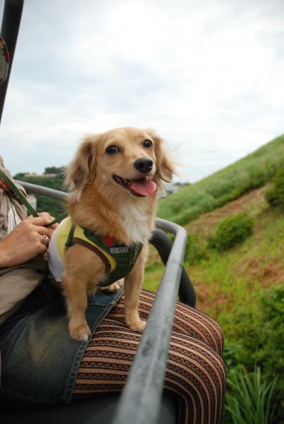 愛犬と伊豆高原&城ヶ崎の旅