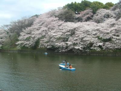 2011 花見ウォーク【千鳥ヶ淵編】
