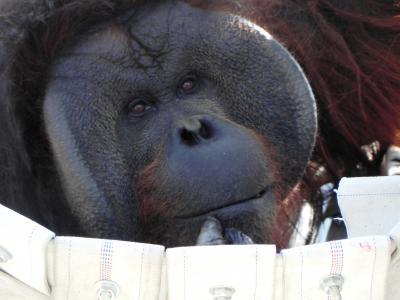 マイレージで夏の北海道へ^^~旭山動物園~