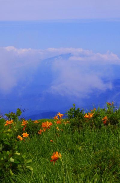 東北日本海沿岸・2011夏(その4/5)★月山・弥陀ヶ原の高山植物と出羽三社を歩く