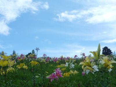 西日本最大級のゆり園へ♪【ダイナランドゆり園】