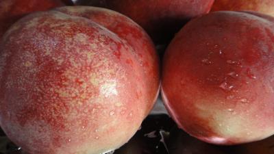日本一の桃・・・今年も1個で満腹。