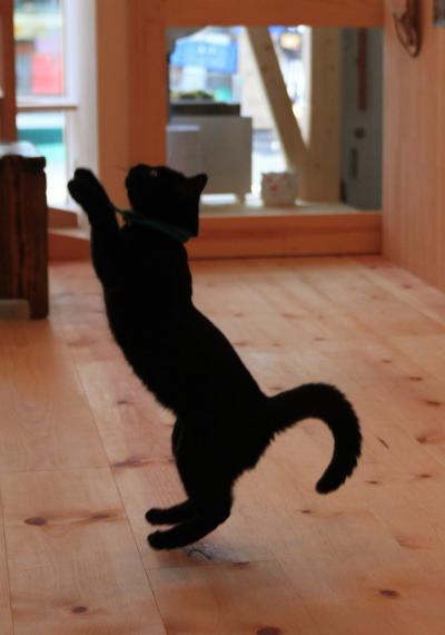 【猫カフェ27】 猫とお昼寝できるカフェ 「てんてん」