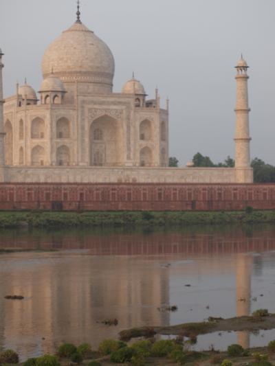 マンゴーとアショーカとリキシャーと <インド旅行記 アグラ編>