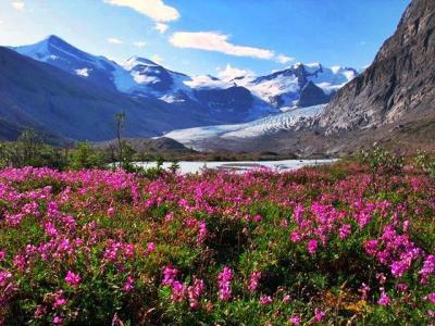 山神様からのサプライズ☆7時間を歩くご褒美は…天空の花畑 & 一面の氷河の世界/スノーバード・パス(Snowbird Pass)に広がる大氷原