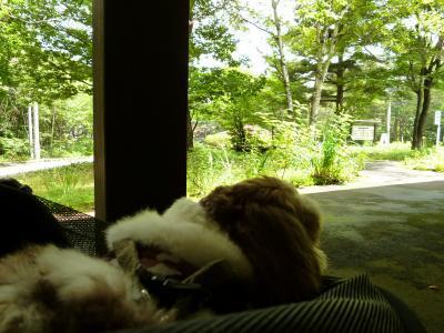 優雅な避暑♪ 上信越国立公園でリゾートライフ! Vol.21 ☆浅間高原の「わかされ茶屋」愛犬と一緒にランチ♪