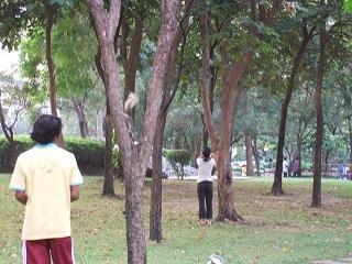 ベンチャシリ公園 毎朝追いかけっこリス ネズミとリスの差は?