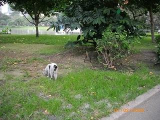 ベンチャシリ公園 増えてきたネコ ネズミ捕りに遭遇