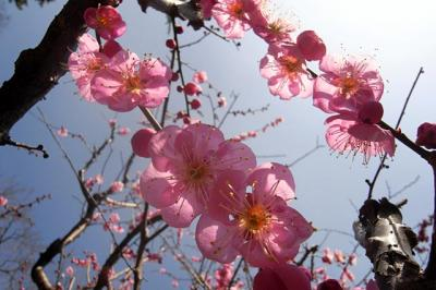 東風吹かば 匂ひおこせよ 梅の花~北野天満宮・二条城編~。