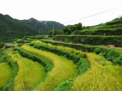 2011年 香川県 小豆島