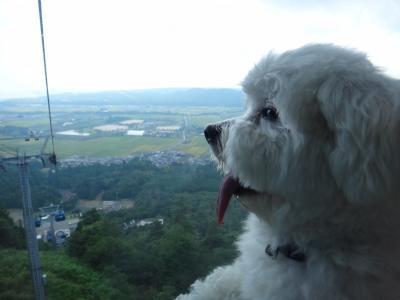 箱館山ゆり園にピクニック