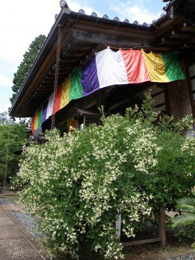兵庫秋の花めぐり① 高照寺白萩祭