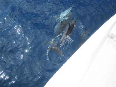 ハワイ4島クルーズ NCL Pride of America に乗船 ⑤Hawaii Konaではカタマランに乗ってイルカと競争♪《Day5》