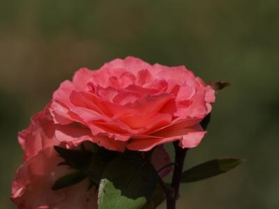 足立区 都市農業公園に 咲く 花たち