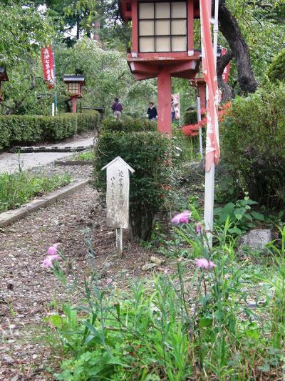 長瀞・秋の七草寺めぐり・・・⑦撫子の不動寺