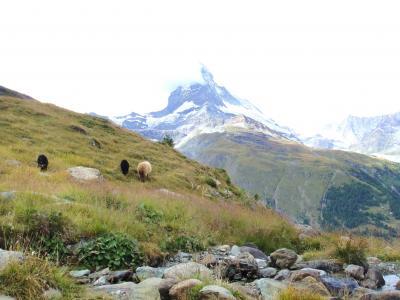 大自然スイス 憧れのアルプスハイク!2010 Vol.2 ゴルナーグラート展望台へ